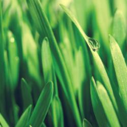 grass_sqr-forest